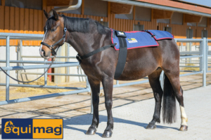 Equimag compact